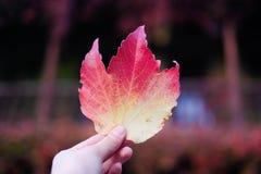 Permesso di autunno disponibile Fotografie Stock