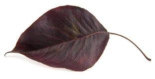 Permesso di autunno rosso immagini stock libere da diritti