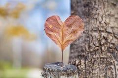 Permesso di autunno rosso in forma di cuore Concetto di amore fotografia stock