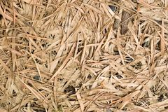 Permesso di bambù secco immagine stock