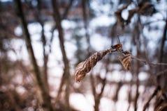 Permesso di inverno Fotografia Stock