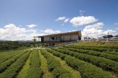 Permesso di tè verde Fotografia Stock Libera da Diritti