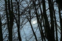 Permesso scuro del parco di scena meno alberi fotografie stock libere da diritti