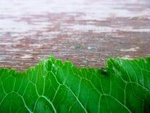 Permesso verde da sotto sul vecchio di legno Effetto di prospettiva Priorità bassa per il vostro testo Fotografia Stock