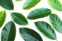 Permesso verde isolato sopra fondo bianco Fotografia Stock