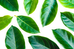 Permesso verde isolato sopra fondo bianco Fotografie Stock