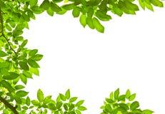 Permesso verde su priorità bassa bianca Fotografia Stock Libera da Diritti