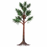 Permian Cordaites Tree Royalty Free Stock Images