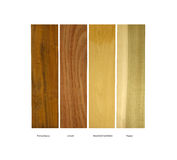 Pernambuco,Locust,Boxwood and Poplar wood samples. Real wood samples of Pernambuco, Locust, Boxwood Carribean and Poplar for architectural or construction Stock Photography