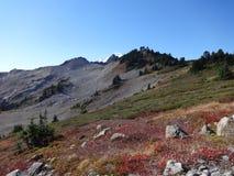 Pernice bianca Ridge Trail nella caduta Fotografia Stock Libera da Diritti