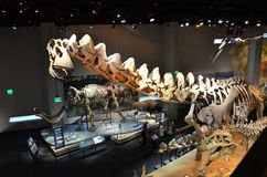 Perot Museum Fossils Royalty Free Stock Photography