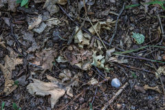 Perpendicular photo of the ground with rocks leaves and branches Stock Photography