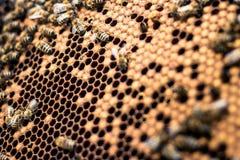 Perpesctive einer Bienenwabe lizenzfreies stockbild