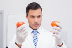 Perplex scientist holding two tomatoes. In the laboratory Royalty Free Stock Images