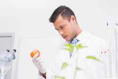 Perplex scientist looking at tomato Stock Images