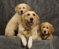 Perra y perritos en estudio imagen de archivo libre de regalías