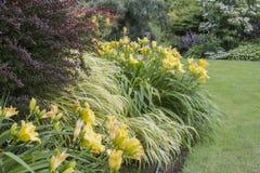 Free Perrenial Garden Stock Photos - 41952523