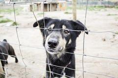 Perrera del perro cerrada Foto de archivo