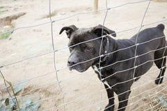 Perrera del perro cerrada Fotografía de archivo