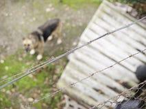 Perrera del perro cerrada Imagen de archivo libre de regalías