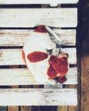 Perrito Fotos de archivo libres de regalías