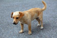 perrito abandonado Imagen de archivo