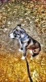 Perrito adoptivo foto de archivo