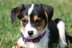Perrito adorable Foto de archivo libre de regalías