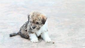 Perrito adorable