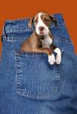 Perrito adorable en dril de algodón fotos de archivo libres de regalías