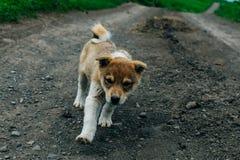 Perrito adorable en el borde de la carretera Mentira joven del perro en el lado del camino foto de archivo
