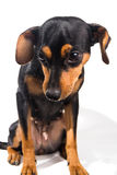 Perrito adorable en el fondo blanco Imagenes de archivo