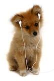Perrito adorable que escucha la música fotos de archivo libres de regalías