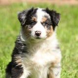 Perrito adorable que le mira Imágenes de archivo libres de regalías