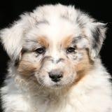 Perrito adorable que le mira Imagen de archivo