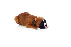 Perrito adorable que miente en el piso Imagenes de archivo