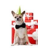 Perrito amarillo claro cerca de los presentes Fotografía de archivo libre de regalías