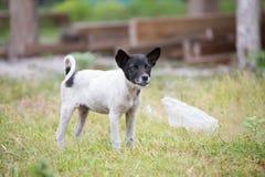 Perrito asiático lindo fotografía de archivo