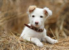 Perrito blanco Imagen de archivo libre de regalías