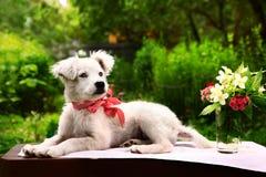 perrito blanco con el florero del jazmín y del clavel Fotografía de archivo