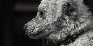 Perrito blanco lindo Imágenes de archivo libres de regalías