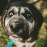Perrito blanco y negro que mira para arriba en el cierre del wery de la cámara Imagenes de archivo