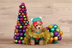Perrito cerca de un árbol de navidad decorativo Imagen de archivo