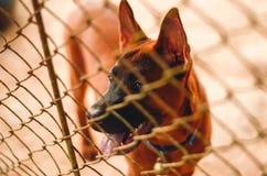 Perrito cerrado en una jaula del perro Imagen de archivo