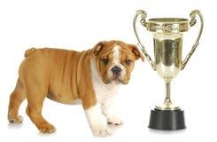 Perrito con el trofeo imagen de archivo libre de regalías
