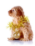 Perrito con la bola y la malla del Año Nuevo. Fotos de archivo