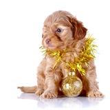 Perrito con la bola y la malla del Año Nuevo. Fotografía de archivo