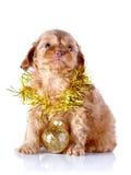 Perrito con la bola y la malla del Año Nuevo. Fotos de archivo libres de regalías