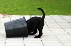 Perrito con la cabeza en cubo Imágenes de archivo libres de regalías