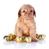 Perrito con las bolas del Año Nuevo. Fotografía de archivo libre de regalías